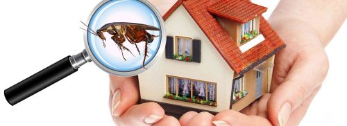شركة رش حشرات ابوظبي
