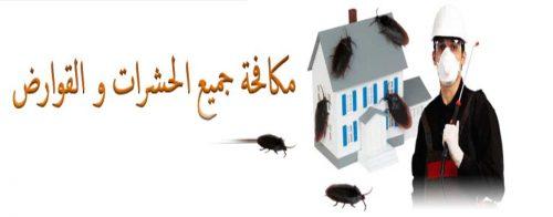 مكافحة حشرات ابوظبي السريعه