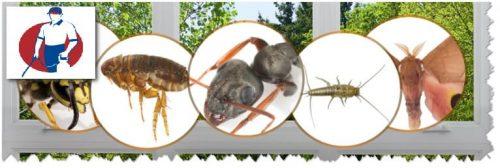 شركة مكافحة الحشرات ابوظبى