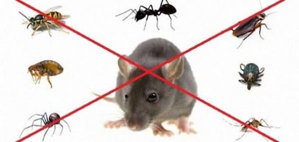 رش الحشرات في ابوظبي