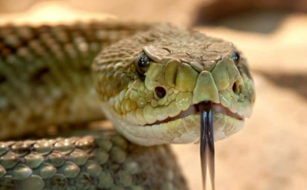 شركة مكافحة الثعابين بابوظبى