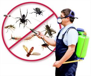 مكافحة حشرات بأبو ظبي