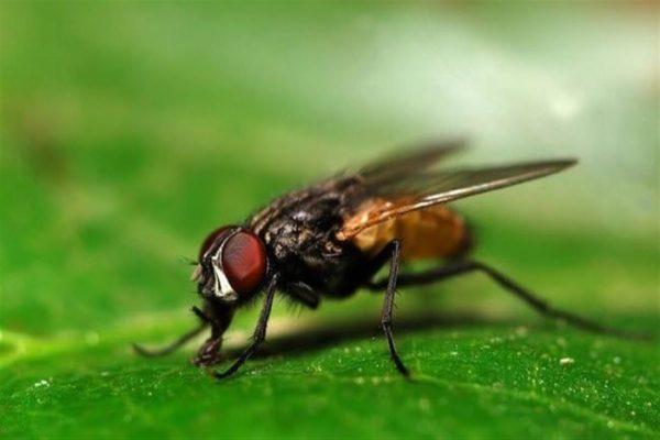 طرد حشرات من البيوت