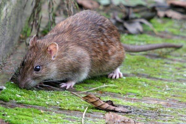 شركة مكافحة فئران ابوظبي