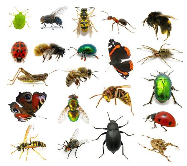 مكافحه جميع الحشرات الضاره