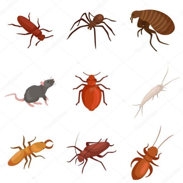 رش جميع الحشرات بابو ظبي