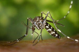 مكافحة الحشرات عجمان