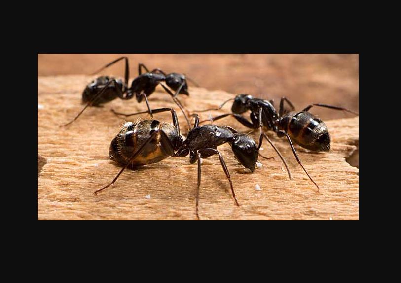 طرد الحشرات من المنازل بابوظبي