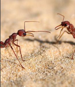 افضل شركة مكافحة الحشرات في الامارات