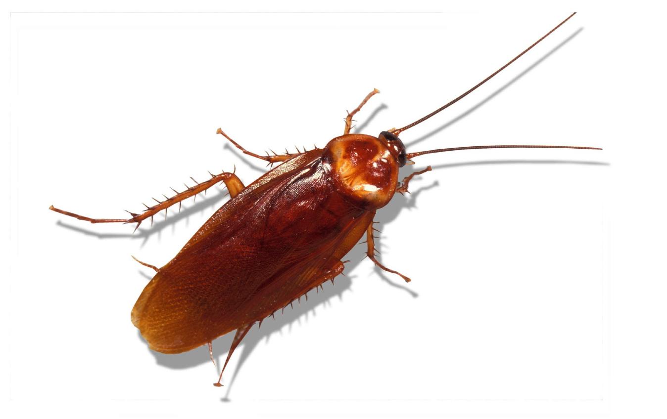 مكافحة الحشرات فى ابو ظبى