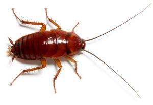 شركات مكافحة النمل الابيض أبوظبي