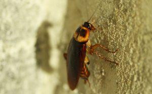 مكافحة الحشرات ابوظبي