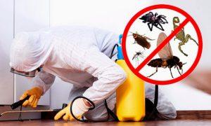 مكافحة الحشرات بلدية العين
