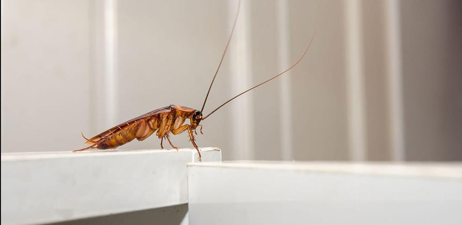 افضل شركات مكافحة حشرات بابوظبي
