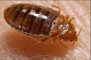 افضل شركة مكافحة الحشرات في ابوظبي