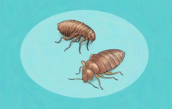 مكافحة الحشرات العين