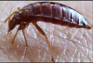 شركة مكافحة الحشرات في ابوظبي
