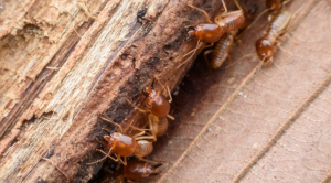 خدمة مكافحة الحشرات في ابوظبي