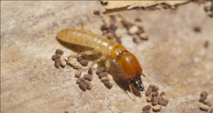 شركات القضاء على الحشرات