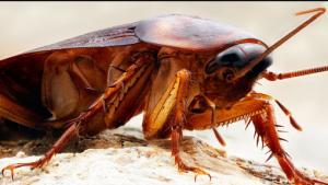 رقم شركة مكافحة حشرات في ابوظبي
