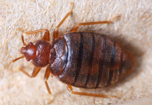 شركات حشرات ابوظبي