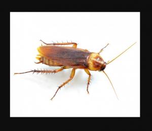 افضل شركة مكافحة حشرات بابوظبي