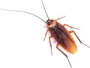 شركات للقضاء الحشرات في ابوظبي