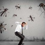شركات مكافحة الحشرات في الفجيرة