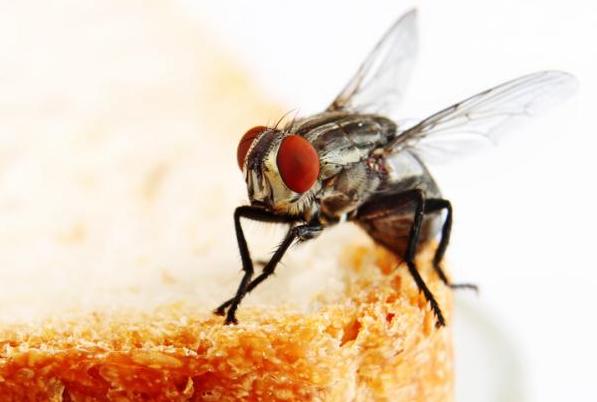 افضل شركات مكافحة الحشرات في ابوظبي