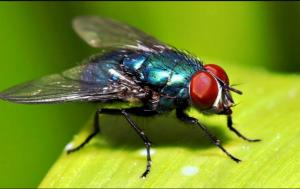رقم شركة مكافحة حشرات بابوظبي