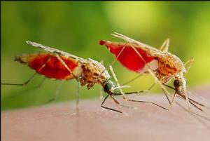افضل شركة مكافحة حشرات في ابوظبي